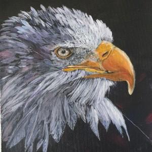 Bald Eagle - 3 x 3 Minute Series
