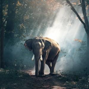 Elephant in a Shaft of Sunlight